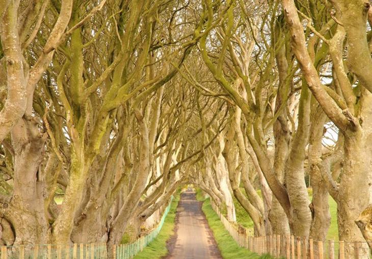 Dark Hedges - Irlanda do Norte - Direitos Reservados John5199/Flickr