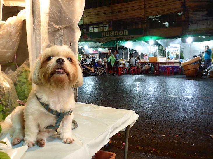 Cão no Mercado das Flores, Banguecoque © Viaje Comigo