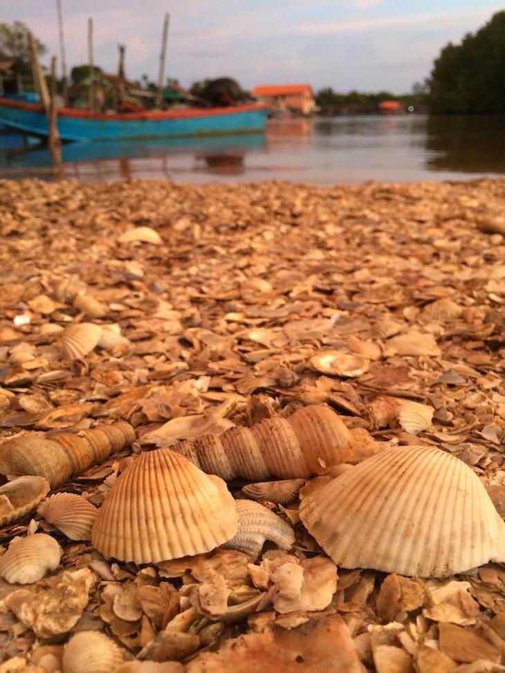 Conchas na praia junto do TewThara Restaurant © Viaje Comigo