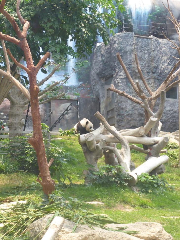 Pavilhão do Panda Gigante de Macau © Viaje Comigo