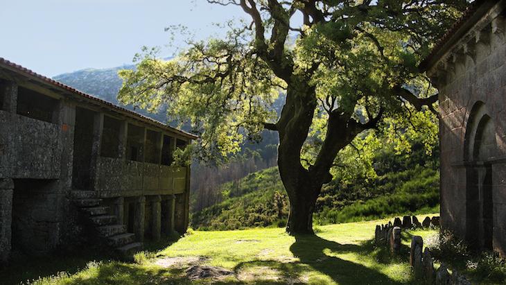 Garranos na Serra d'Arga © CM Caminha