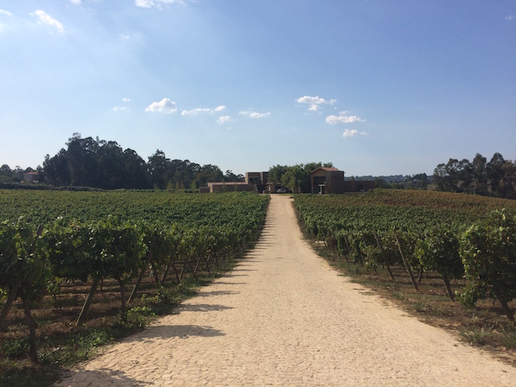 Caminho de vinhas no Monverde - Wine Experience Hotel © Viaje Comigo