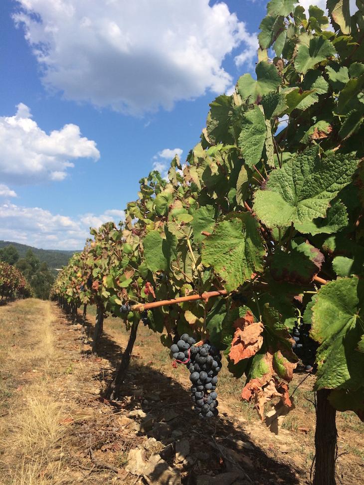Vinhas do Monverde - Wine Experience Hotel © Viaje Comigo