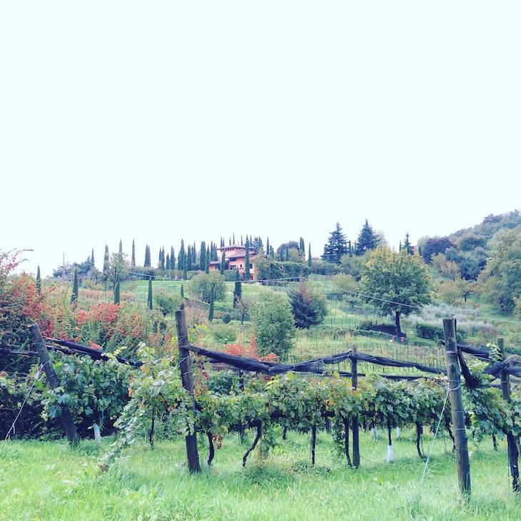 Bergamo, vinhas em Scanzorosciate © Viaje Comigo