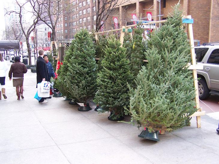 Venda de pinheiros de Natal nas ruas de Nova Iorque © Viaje Comigo