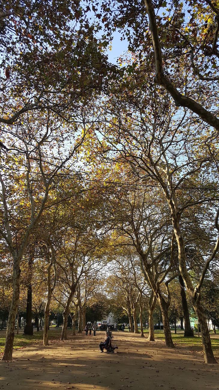 Outono no Jardim do Passeio Alegre © Viaje Comigo
