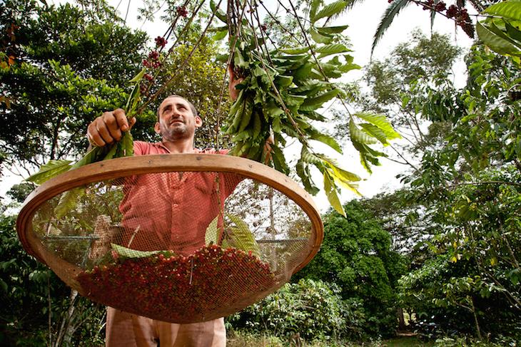 Vale do Anari - Rondonia - Brasil - Cafe organico - Waldir Ruela. Mutirao de trabalho - Ministerio do Desenvolvimento Agrario - © Marcelo Curia