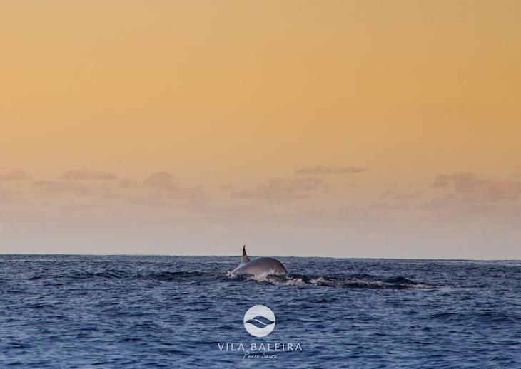 Vila Baleira Resort - Casamento no meio do mar com golfinhos