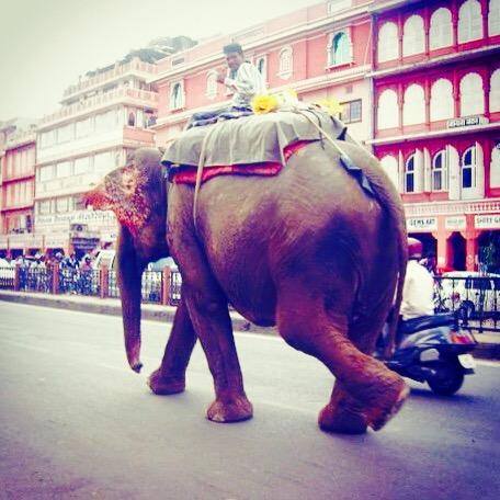 Índia, Jaipur © Viaje Comigo