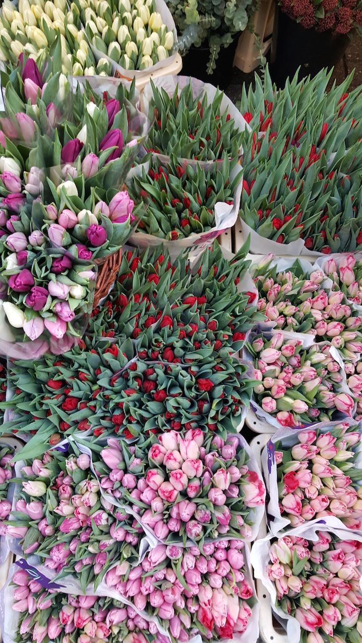 Bloemenmarkt - Mercado de Flores em Amesterdão © Viaje Comigo
