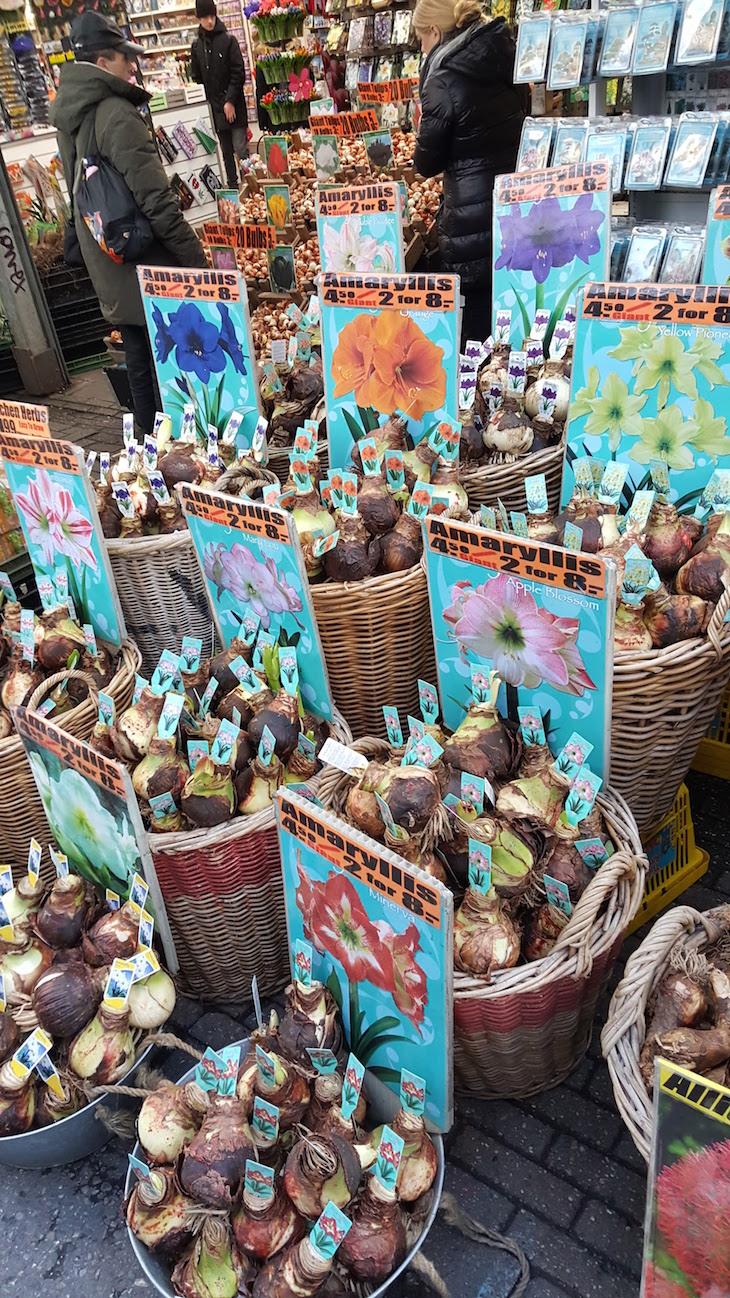 Bolbos no Bloemenmarkt - Mercado de Flores em Amesterdão © Viaje Comigo