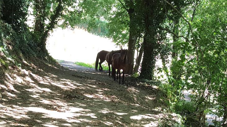 Cavalos da Quinta da Bouça © Viaje Comigo