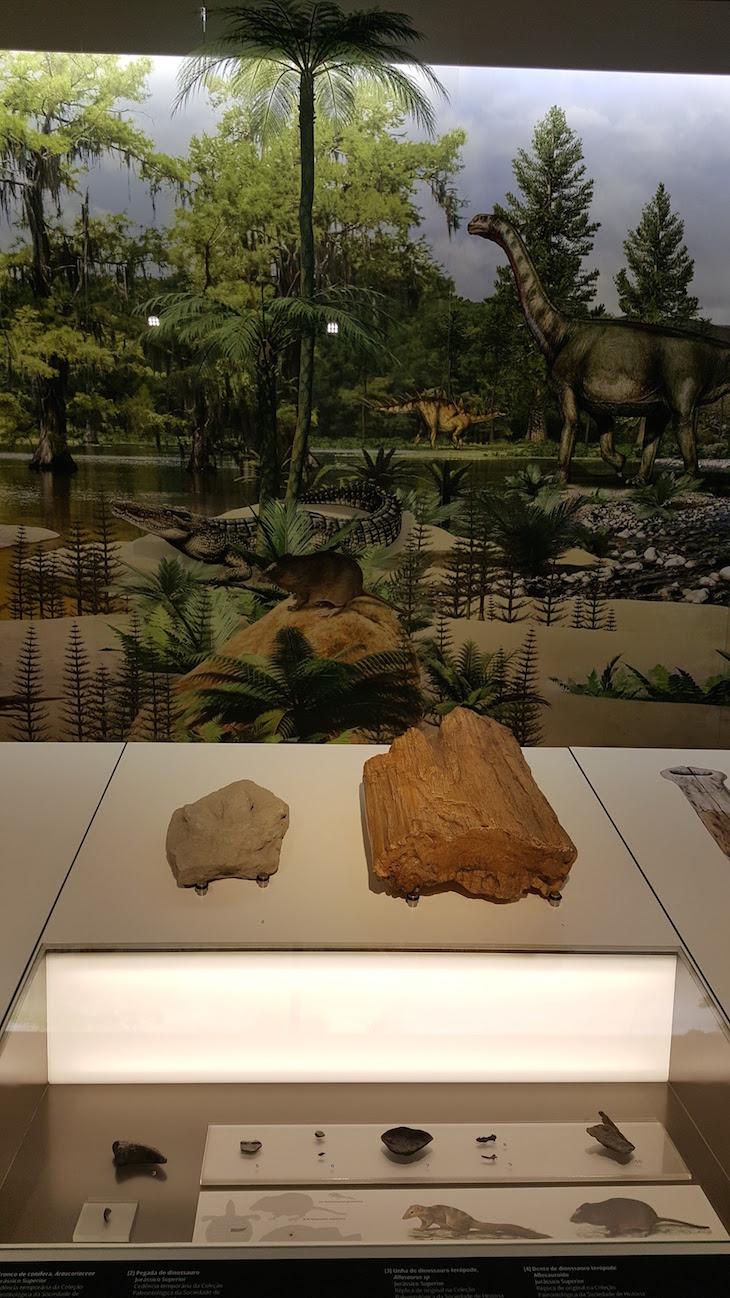 Exposição no Museu de Leiria © Viaje Comigo