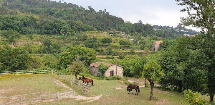 Na Quinta da Bouça - Marco de Canaveses - Portugal © Viaje Comigo