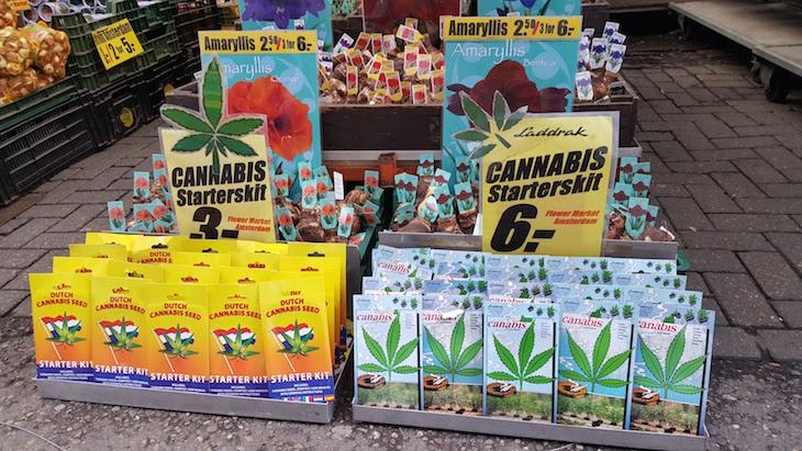 Plantas de Cannabis no Bloemenmarkt - Mercado de Flores em Amesterdão © Viaje Comigo