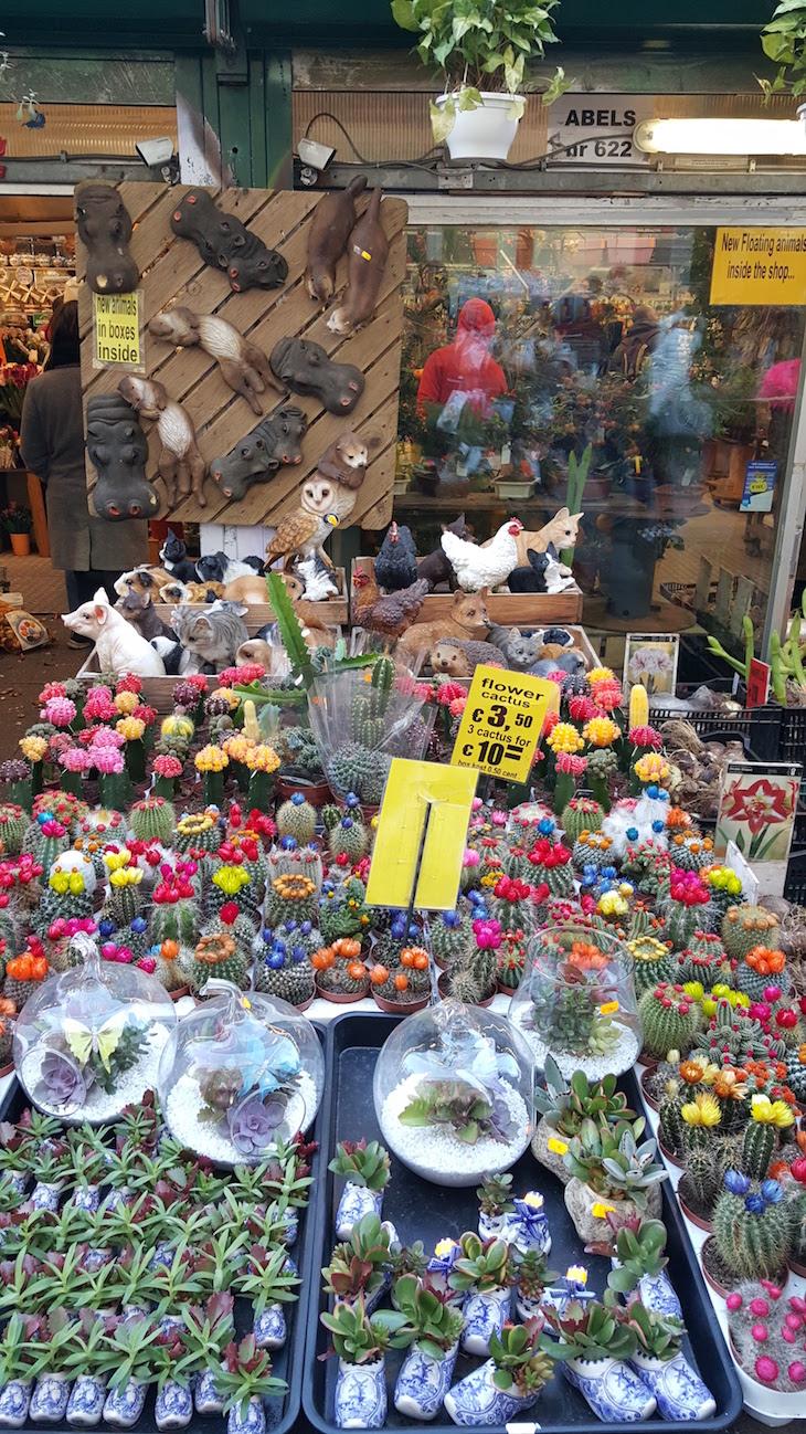 Plantas no Bloemenmarkt - Mercado de Flores em Amesterdão © Viaje Comigo