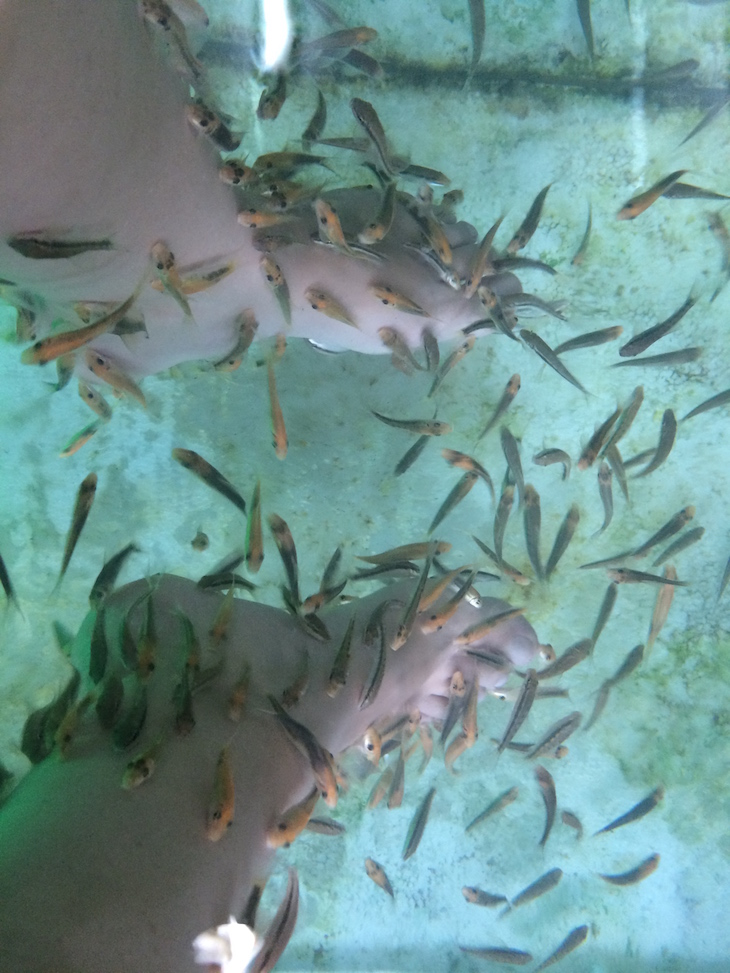 Spa dos peixinhos em Banguecoque - Tailândia © Viaje Comigo
