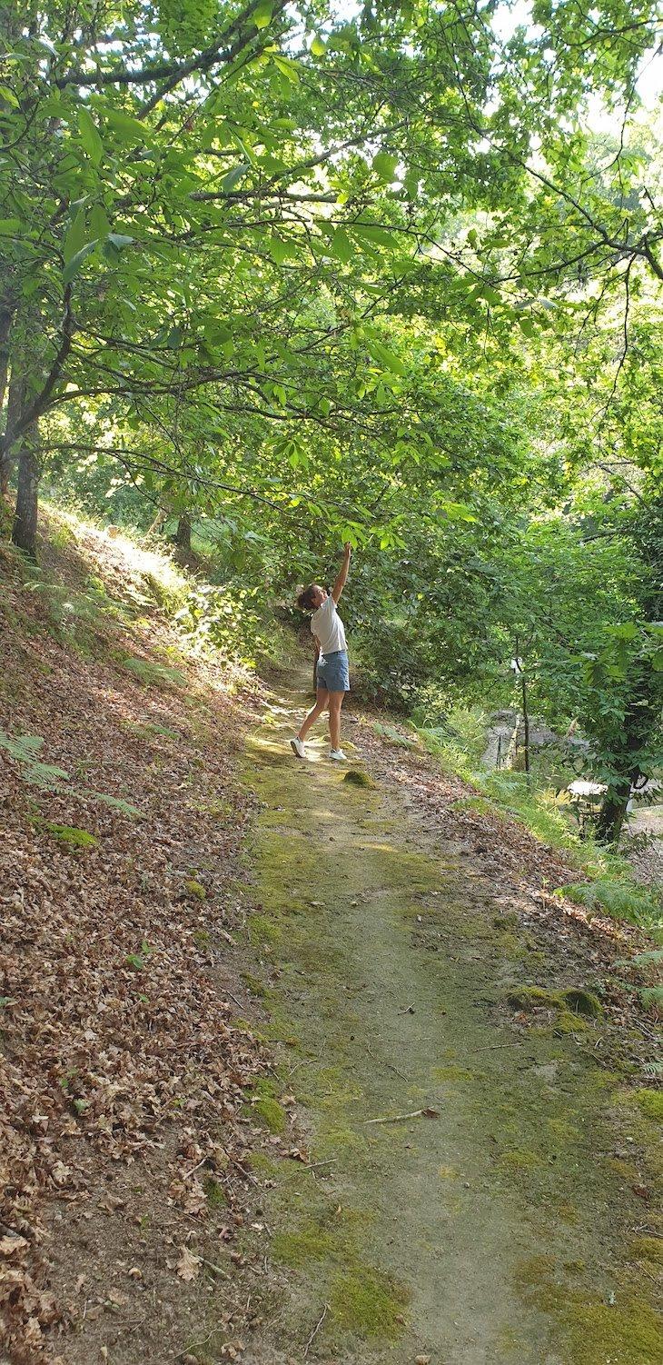 Bosque da Quinta da Bouça - Marco de Canaveses - Portugal © Viaje Comigo