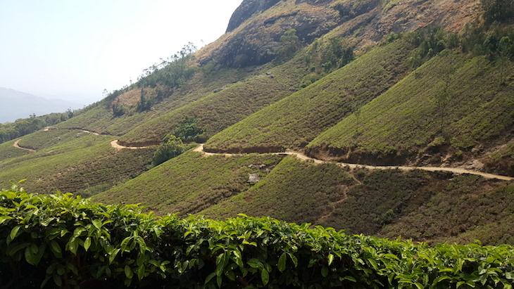 Campos de chá, em Munnar, Kerala © Viaje Comigo