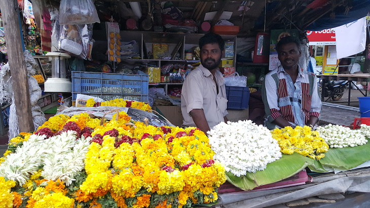 Munnar, Kerala © Viaje Comigo