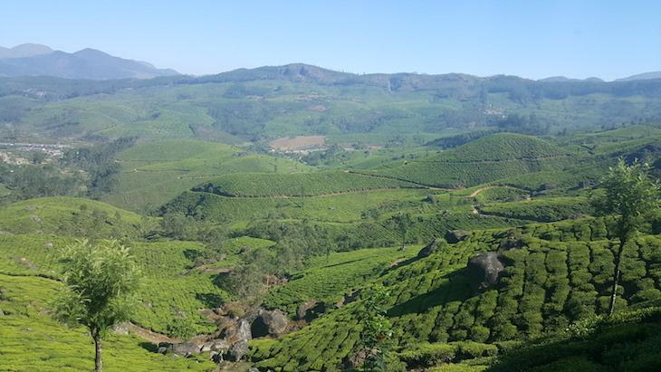 Plantações de Chá, em Munnar, Kerala © Viaje Comigo