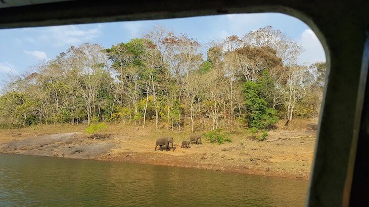 Família de elefantes na Periyar Tiger Reserve © Viaje Comigo