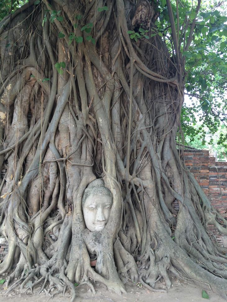 Buda na árvore em Wat Maha That, Ayutthaya, Tailândia © Viaje Comigo