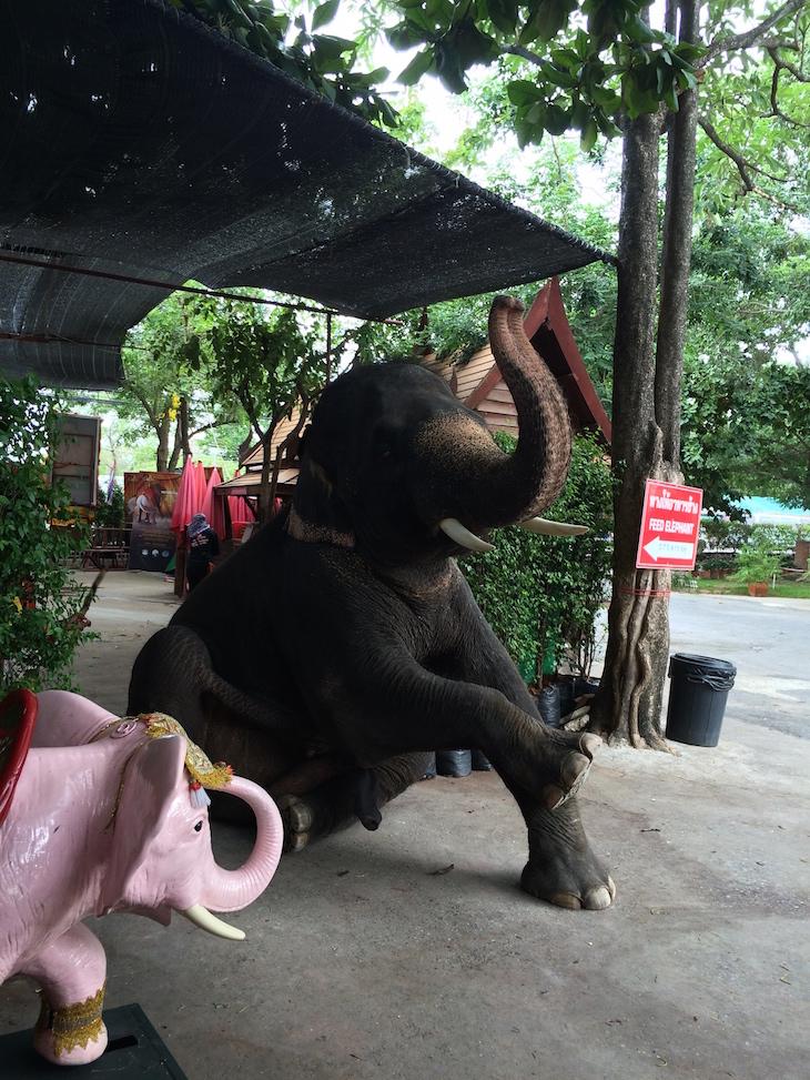 Elefante bebé, Ayutthaya, Tailândia © Viaje Comigo