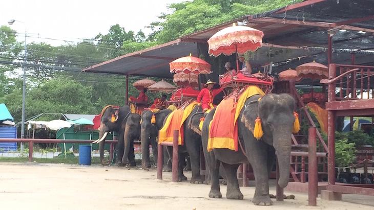 Elefantes para turistas, Ayutthaya, Tailândia © Viaje Comigo