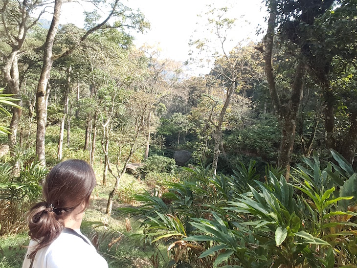 Imagem tirada com selfie stick - SNa floresta, Campismo Kalypso Adventure, Suryanelli, Munnar, Kerala © Viaje Comigo