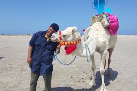 Dromedário - Ras R'Mal - Ilha dos Flamingos, Djerba, Tunísia © Viaje Comigo