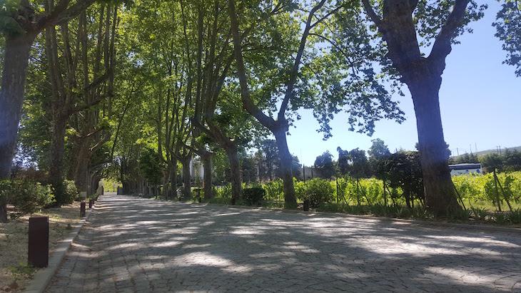 Estrada de árvores na Quinta da Pacheca © Viaje Comigo