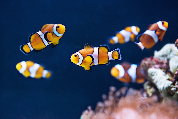 Sea Life Porto - Direitos Reservados