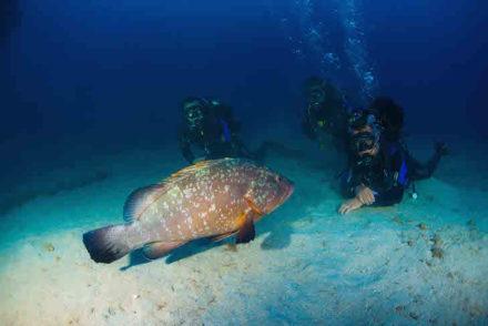 Scuba Diving Madeira - Direitos reservados
