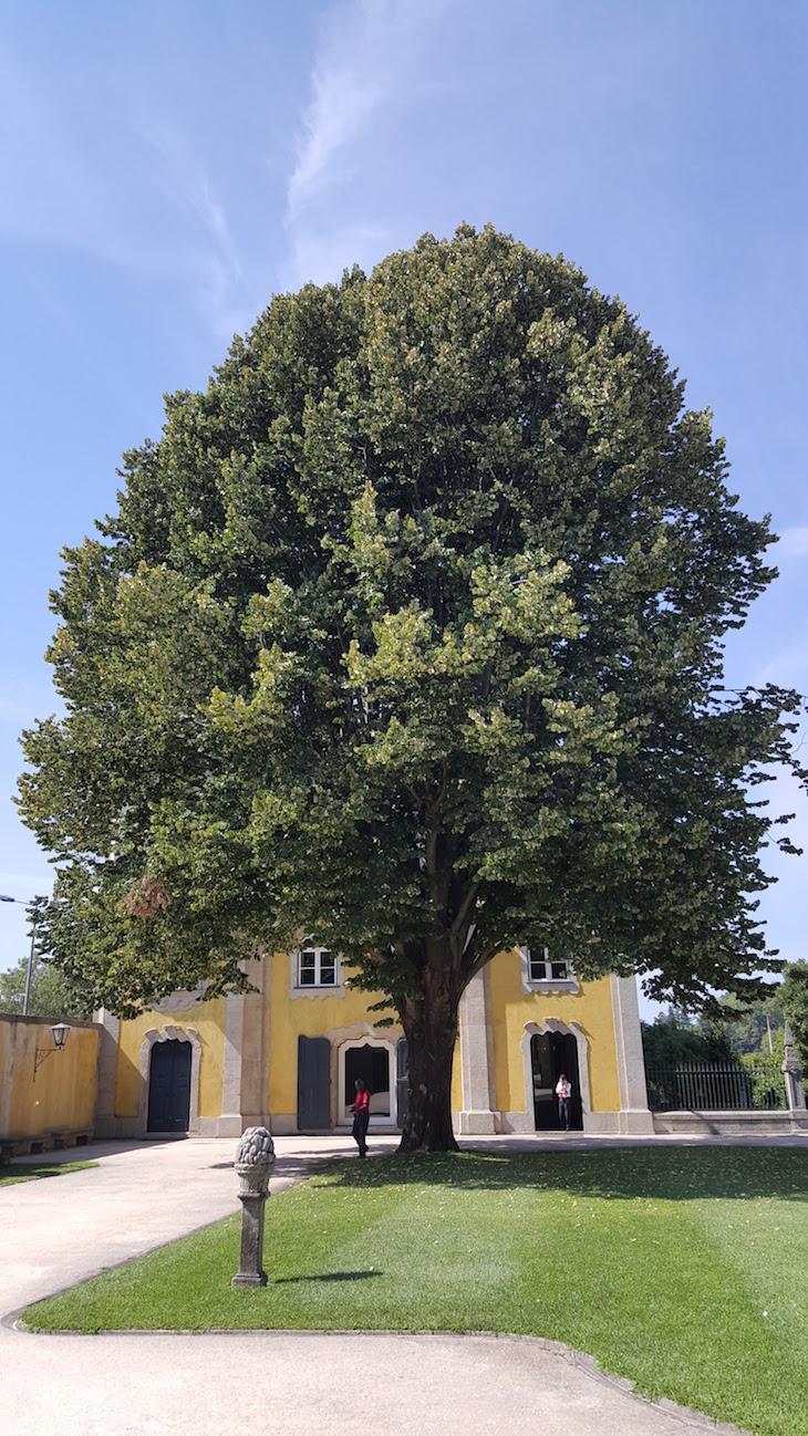 Árvore na Casa e Quinta da Prelada © Viaje Comigo®