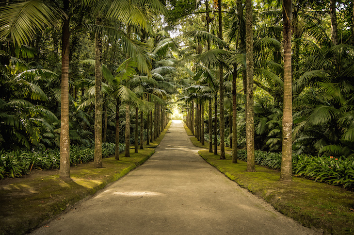 Parque Terra Nostra - Fotografia ©Ines Marques