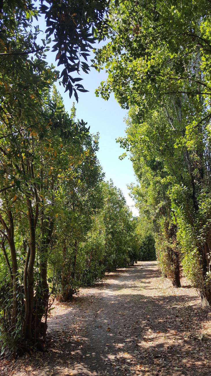 Árvores no Cantinho das Aromáticas © Viaje Comigo