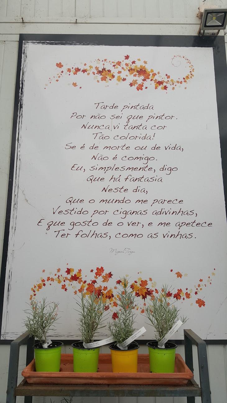 Miguel Torga - Cantinho das Aromáticas © Viaje Comigo
