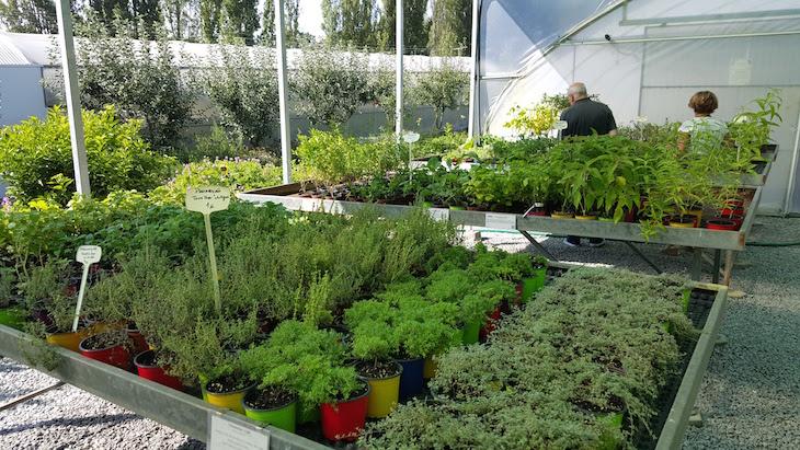 Venda de plantas- Cantinho das Aromáticas © Viaje Comigo