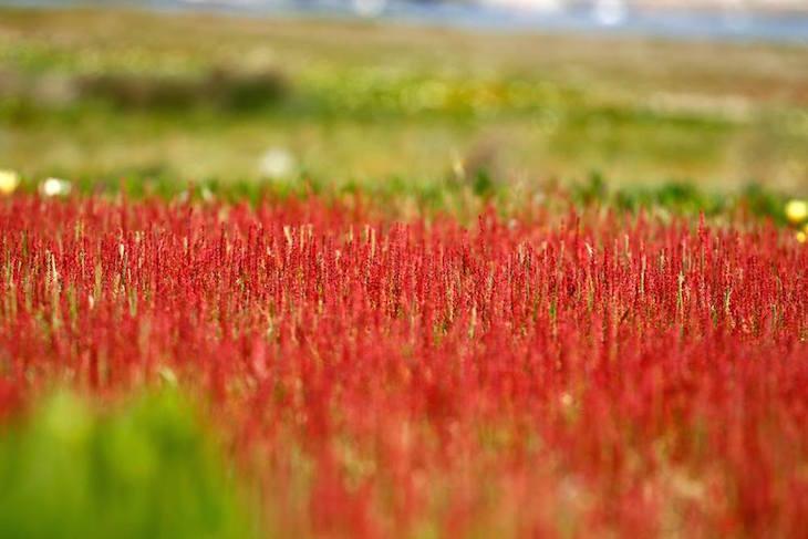 Mar vermelho © Maria Oswalda Rego