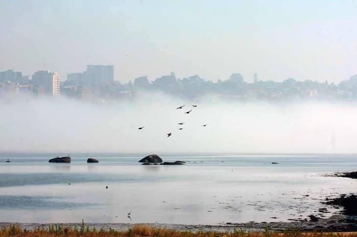 Nevoeiro no Estuário do Douro © Maria Oswalda Rego