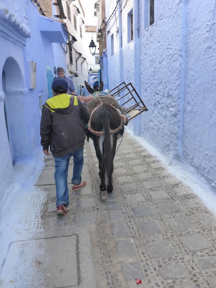 Burros nas ruas estreitas de Chefchaouen, Marrocos © Viaje Comigo