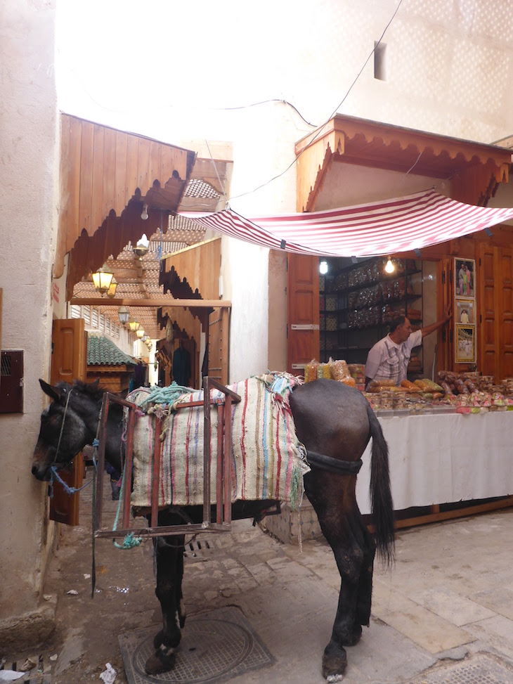 Animais na medina de Fez - Marrocos @ Viaje Comigo