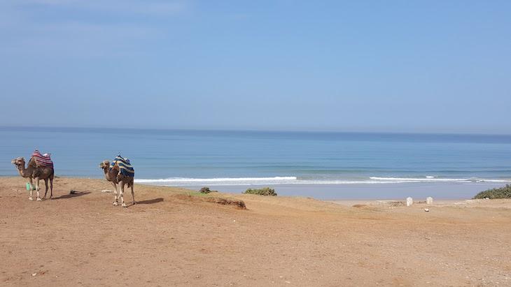 Camelos nas praias de Tânger - Marrocos © Viaje Comigo