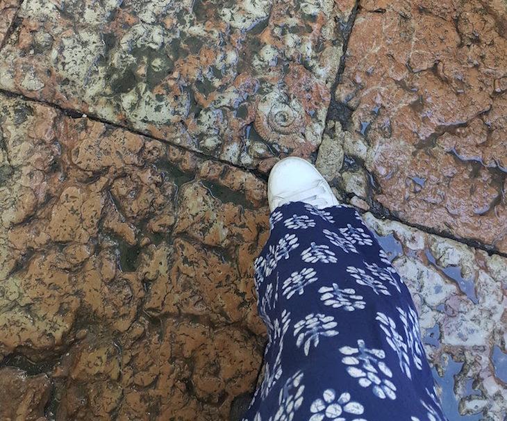 Na ponta do sapato, um fóssil cravado na pedra © Viaje Comigo
