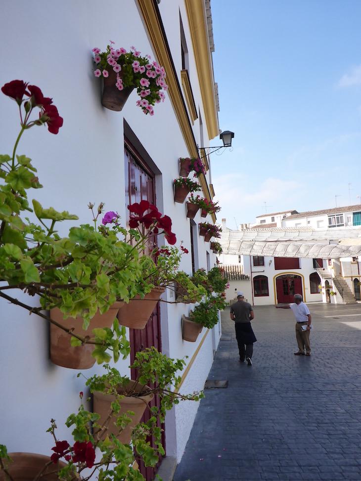 Nunes de Prado - Azeites - Baena - Andaluzia © Viaje Comigo