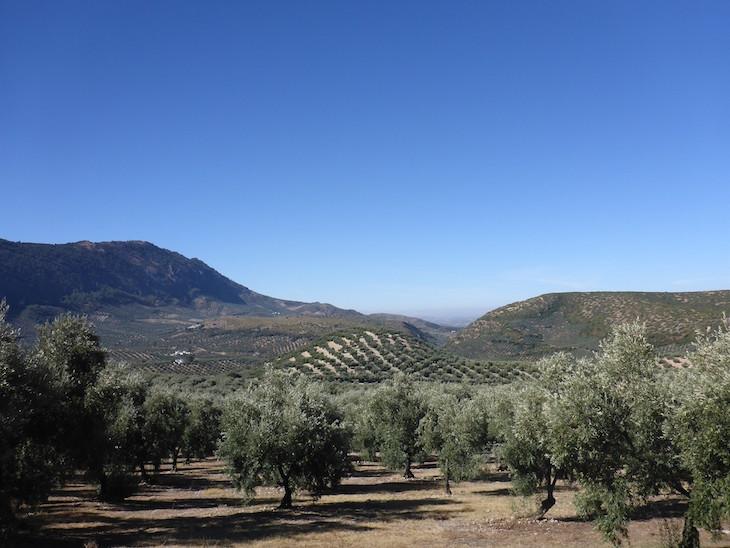 Oliveiras no Parque Natural das serras Subbéticas - Andaluzia © Viaje Comigo