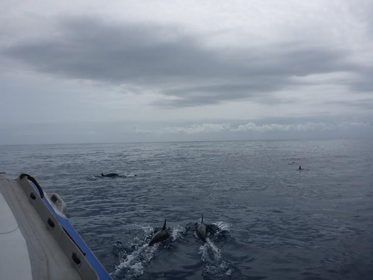 Nadar com golfinhos - White Pearl - Ponta Mamoli - Moçambique © Viaje Comigo