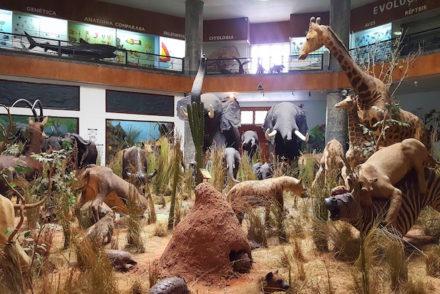 Animais no Museu de História Natural de Maputo © Viaje Comigo