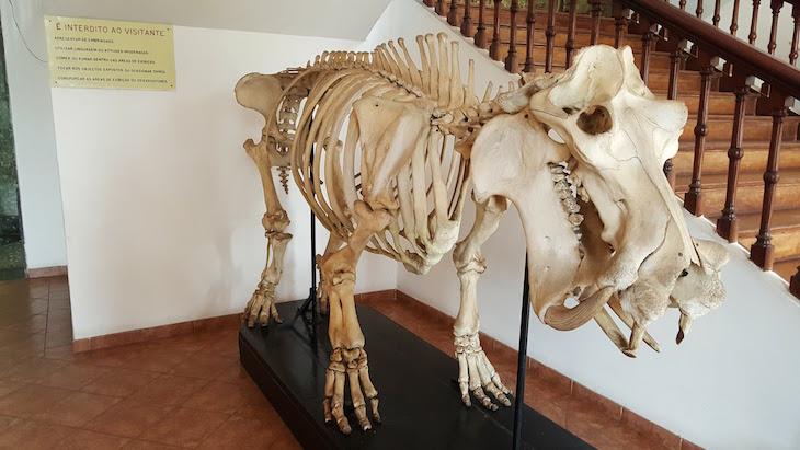 Dinossauro no Museu de História Natural de Maputo © Viaje Comigo